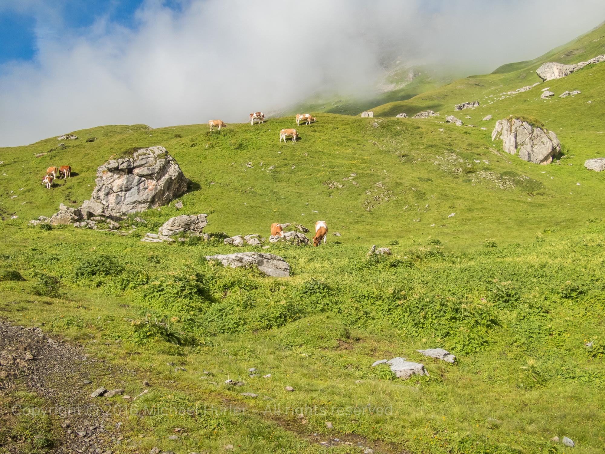 19.08.2016, Bärentrek - Von Mürren nach Kandersteg, Von der Rotstockhütte zur Sefinenfurgge